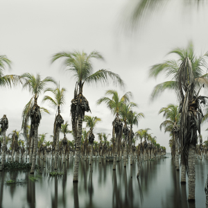 Flooded Palm Trees | Nicaragua 2012