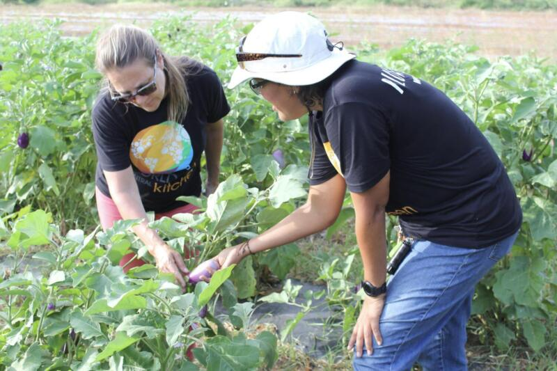 Resilience Program Plow to Plate